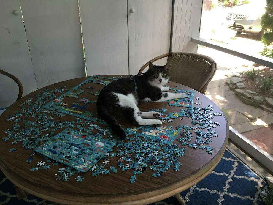 Jasper makes a 1,000-piece puzzle even more difficult on the porch of the vacation home in Dewey Beach, Del. Photo: David Grimm / The Washington Post