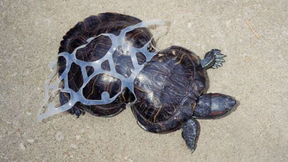 Plastic ending up in the world's oceans is having a detrimental effect on wildlife. Photo: Texas Wildlife Recovery Center
