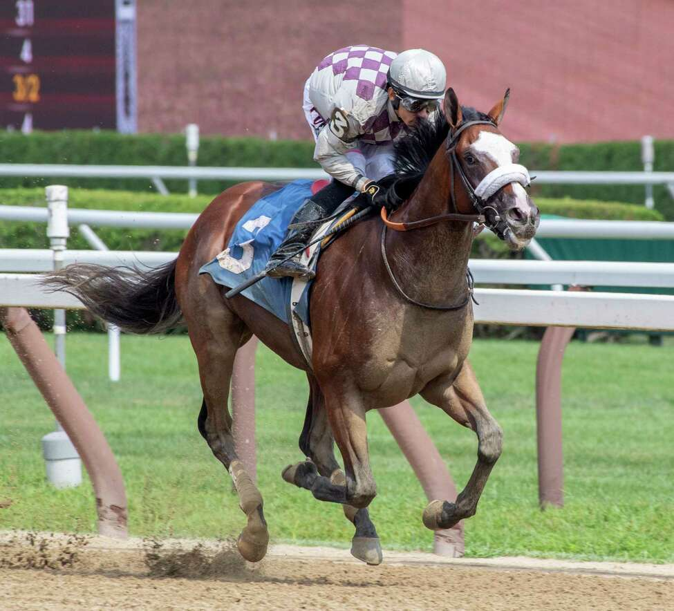 Tiz the Law was throttled back after building a commanding lead by jockey Junior Alvarado to win the 5th race on the card at the Saratoga Race Course waiting to watch one of his horses to work Thursday Aug. 8, 2019 in Saratoga Springs, N.Y. Managing partner of Sacktoga Stables who owns Tiz the Law said in the winner?•s circle that this horse was second best horse he has had in the stable. Sackatoga was the owner of Kentucky Derby and Preakness winner Funny Cide who was also trained by Barclay Tagg. Photo Special to the Times Union by Skip Dickstein
