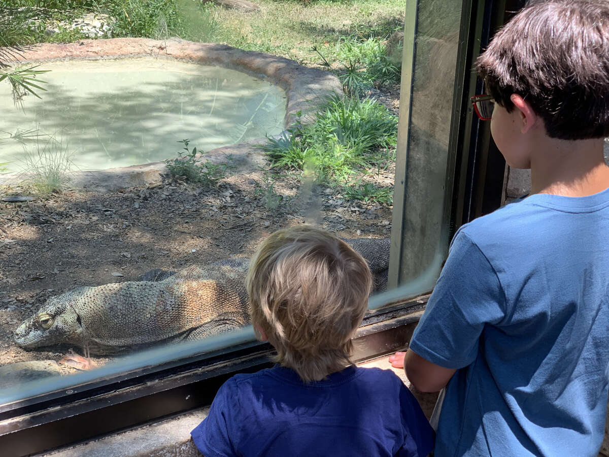 The San Antonio Zoo is offering free admission this weekend to grandparents in celebration of National Grandparent's Day, which is Sunday.