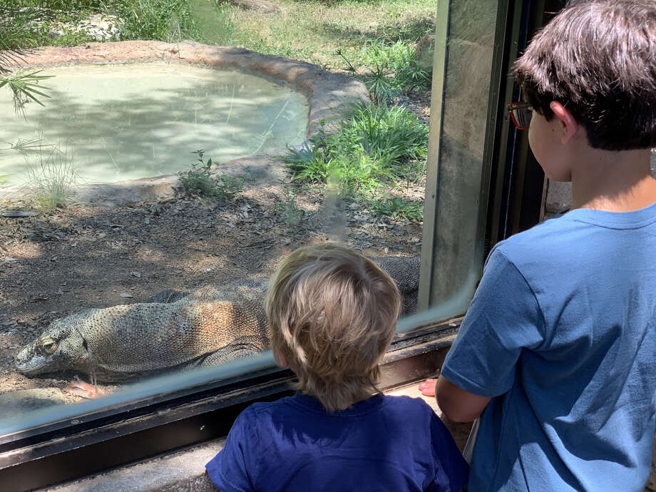 The San Antonio Zoo is offering free admission this weekend to grandparents in celebration of National Grandparent's Day, which is Sunday.  Photo: San Antonio Zoo