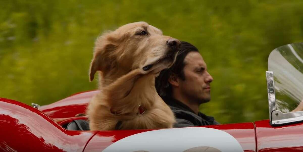 """The Art of Racing in the Rain,"" released in 2019, filmed in Vancouver."