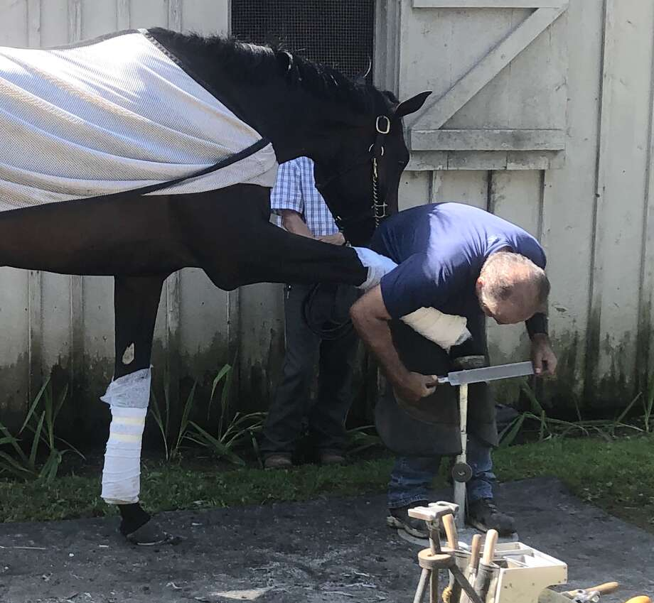 When a horse needs a new pair of shoes, who ya gonna call? Why Ray Amato, Sr,, of course. At least that's who trainer Todd Pletcher has been using since he began training in 1996. Amato and his son, also named Ray, are the best in the business. Here, Ray Sr. does his thing as a very patient Pletcher horse seems to be watching and admiring his new kicks Thursday morning outside Pletcher's barn on the Oklahoma Training Track. (Tim Wilkin / Times Union)
