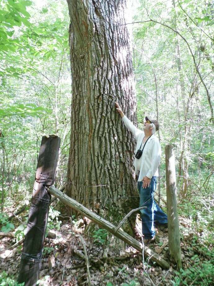 McLean Nature Preserve in Bay County has opened a 40-acre addition that features a trail with a stop at the preserve's largest tree, a cottonwood, shown here, that is 15 feet in circumference. (Photo provided/McLean Nature Preserve)