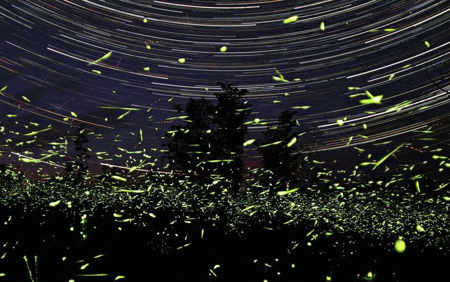 In this one-hour exposure photo  by Steve Irvine, fireflies fly in front of his home in Big Bay, Ontario in Canada. Photo: AP / Steve Irvine