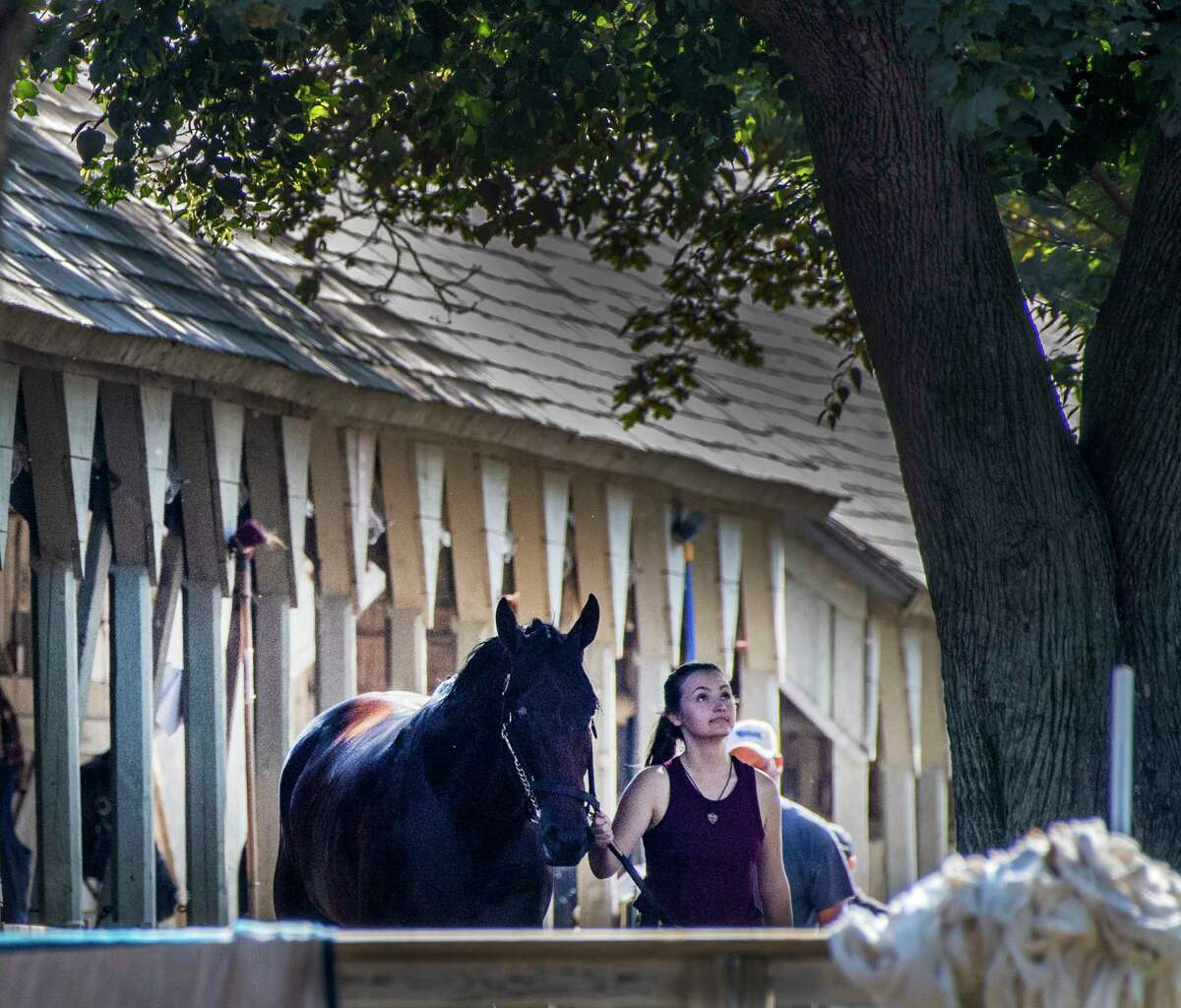 A horse is cooled out underneath the trees in the barn area of Steve Asmussen at the Oklahoma Training Center adjacent to the Saratoga Race Course Friday Aug. 9, 2019 in Saratoga Springs, N.Y. Photo Special to the Times Union by Skip Dickstein