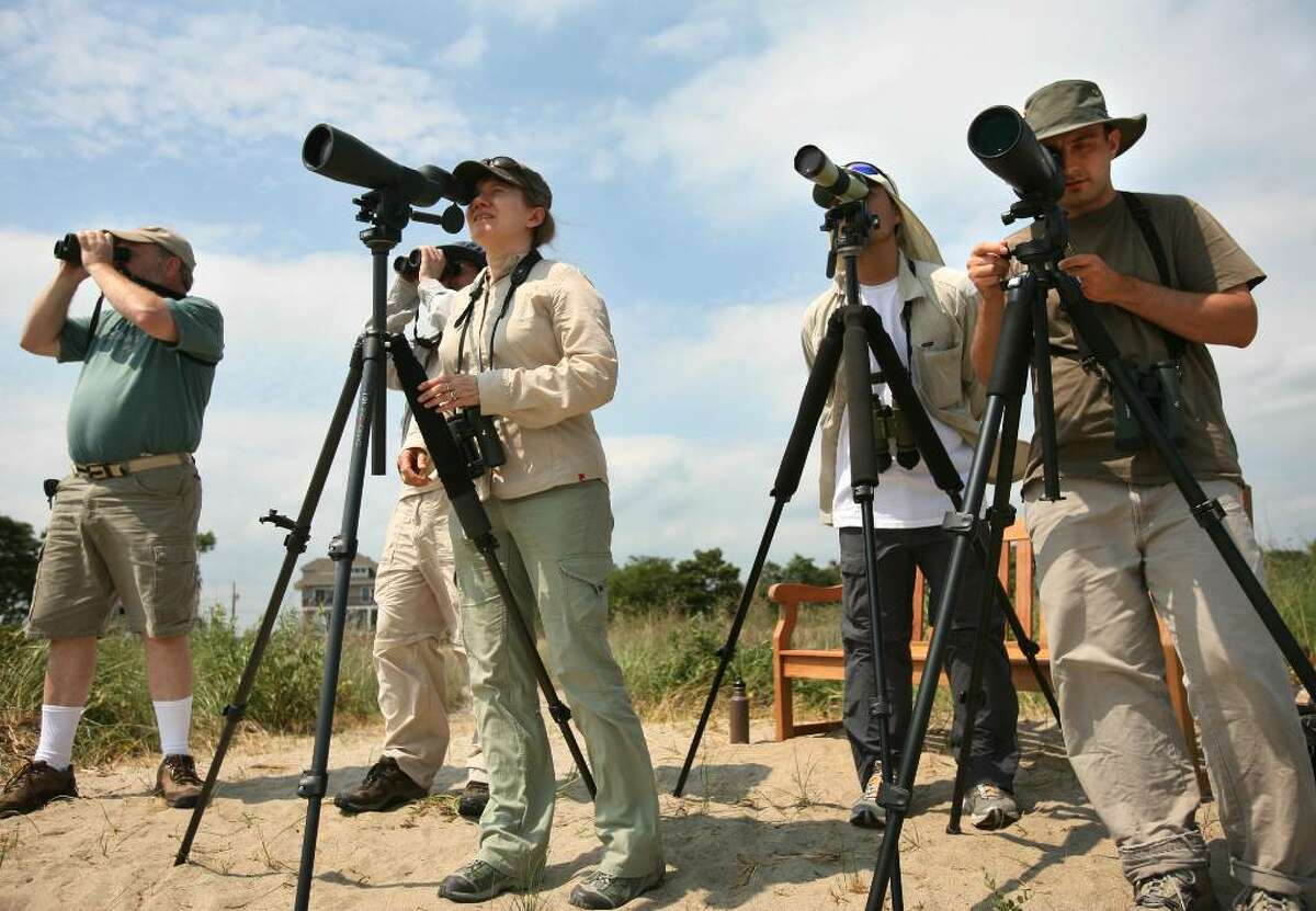 Birders from left; Evan Zupfer of Riverdale, New Jersey, Ken Klapper of Keene, New Hampshire, Patty Dexter of New Jersey, Lance Tanino of Keene, NH, and John Oshlick of Hamden watch a rare white-tailed kite from the shore of Milford Point on Tuesday, August 3, 2010. The bird is native to the southwest United States.