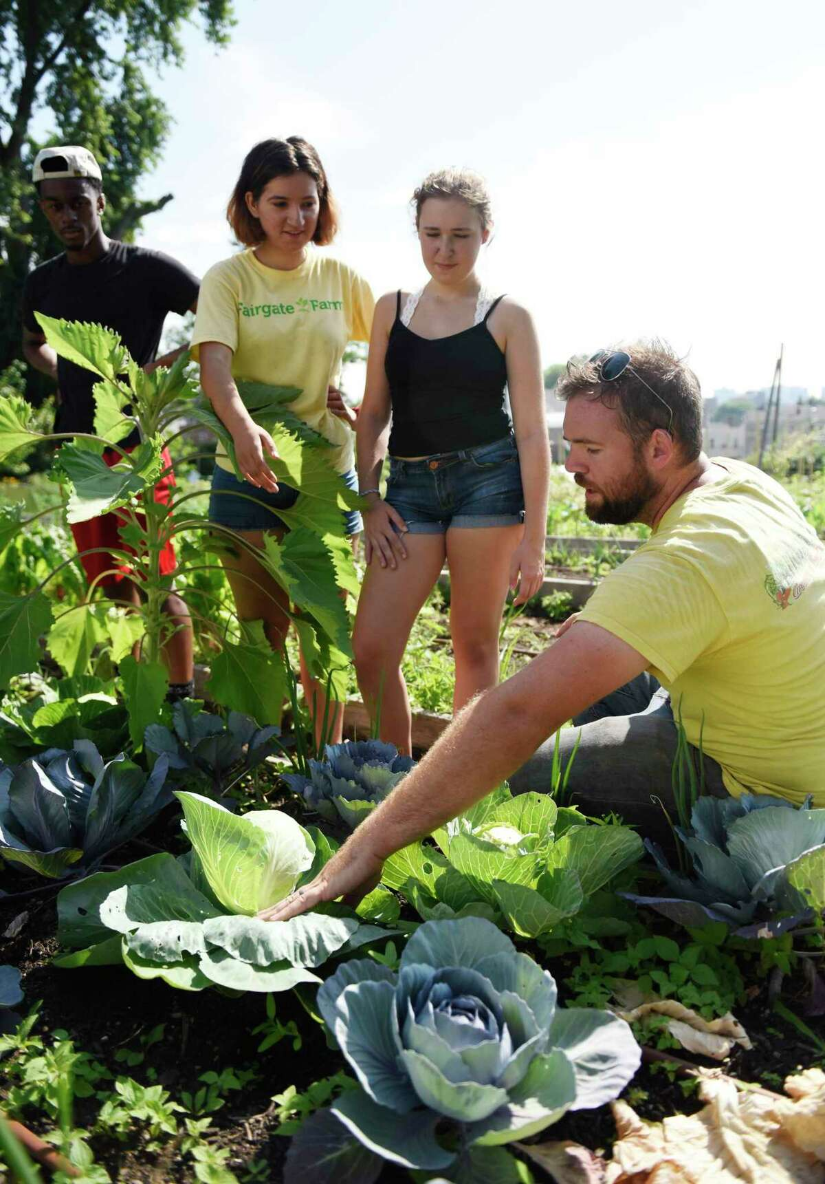 Stamford High School rising senior Darren Cole, left, Westhill High School rising senior Diana Kolaj, center, and Westhill High School rising junior Caroline Klumac gets tips on how to harvest cabbage from Farm Manager Pete Novajosky at Fairgate Farm in Stamford, Conn. Wednesday, July 17, 2019. Several students are working over the summer at Fairgate Farm to gain relevant work experience with their school studies.