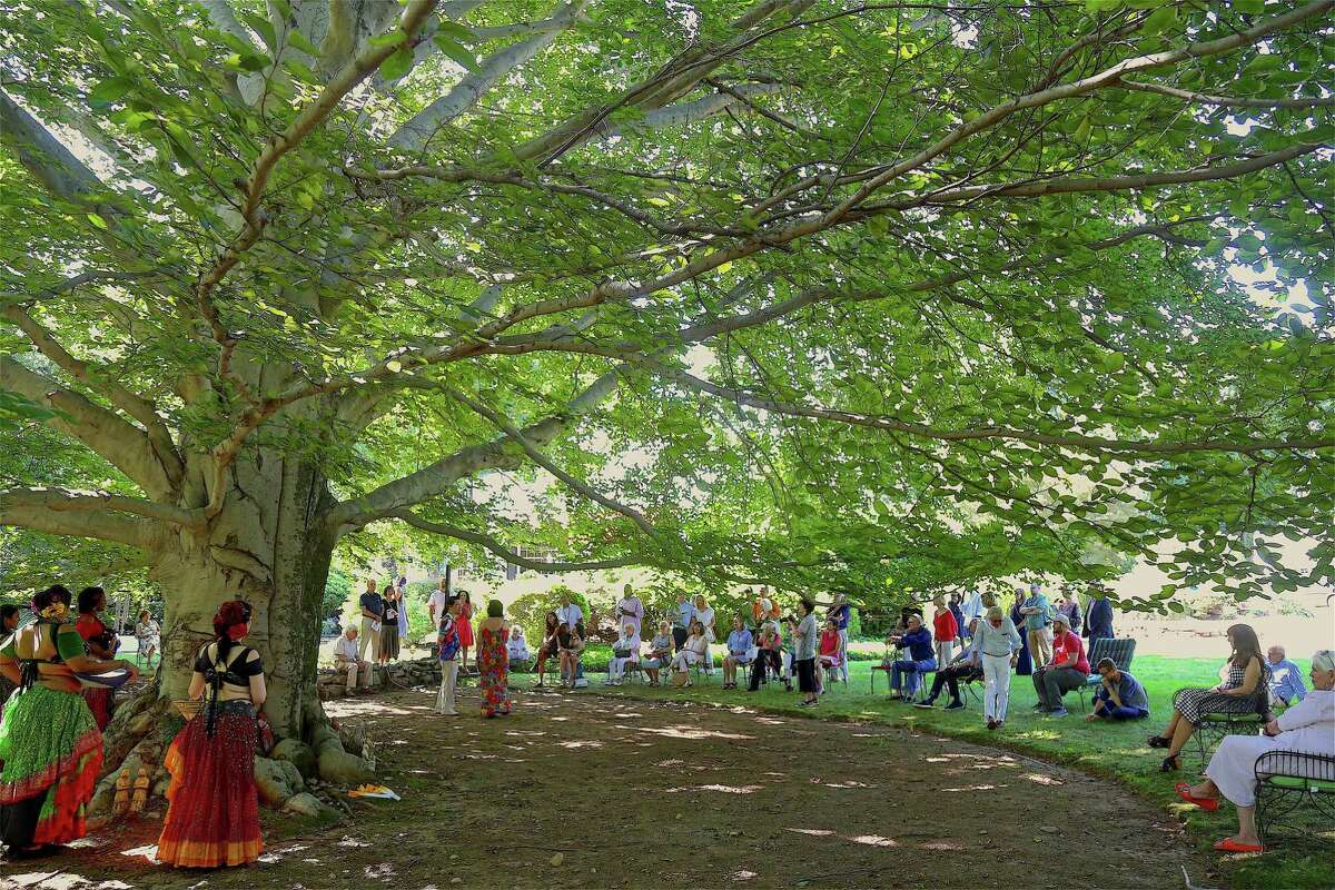 The old beech tree that lends its name to the nonprofit at the 8th Annual Beechwood Open on Sunday, Aug. 11, 2019, in Westport, Conn.