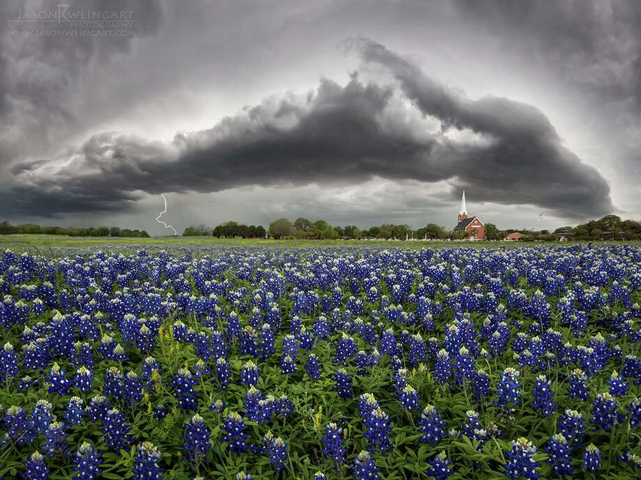 Bluebonnet and wildflower displays are greatly impacted by rain and cold temperatures. >>>What is the Texas wildflower outlook for 2020? Click to see. (Forecasts provided by the Texas Wildflower Project) Photo: Jason Weingart