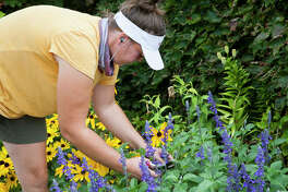 Katie Piper works in one of the eight pocket gardens located on the campus of Lewis and Clark Community College. The annual garden show Sense-Sational Blooms is available for self-guided and staff-guided tours through the end of August