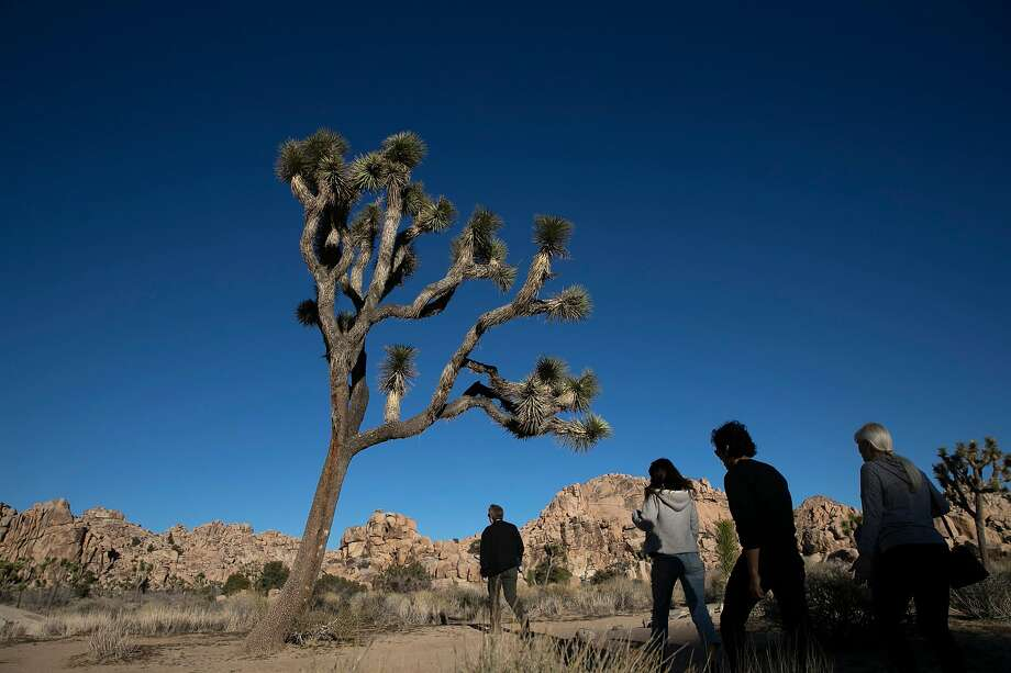 Burned body found in Joshua Tree