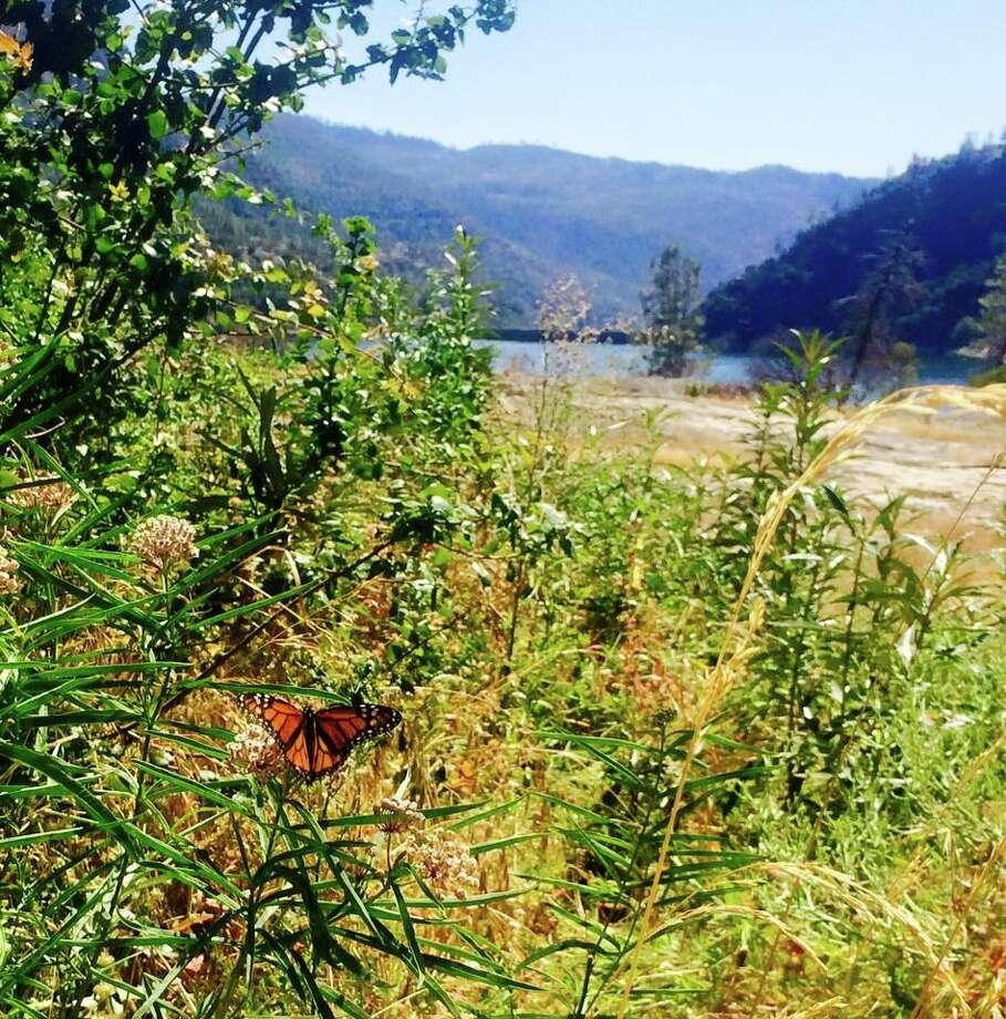 Endangered monarch butterflies return to Yosemite