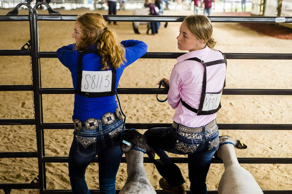 Julia Sanderson, 18, left, and Paige Mesick, 18, right, wait for their division to be called to compete in Sheep Showmanship during the Midland County Fair Monday, Aug. 12, 2019. (Katy Kildee/kkildee@mdn.net)