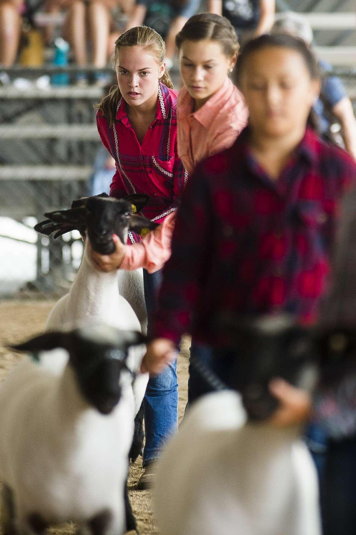 Children compete in Sheep Showmanship during the Midland County Fair Monday, Aug. 12, 2019. (Katy Kildee/kkildee@mdn.net)