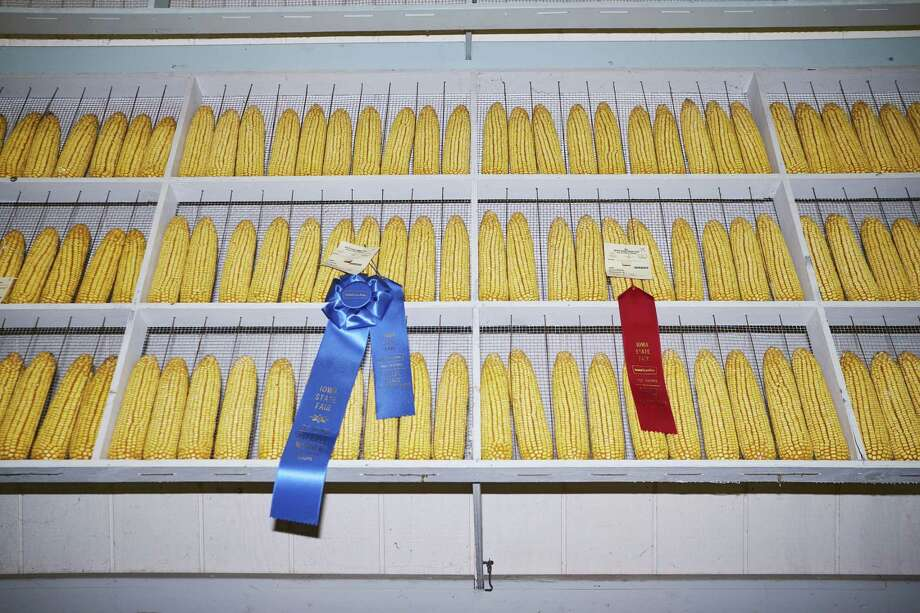 Award-winning ears of corn sit on display at the Iowa State Fair in Des Moines, Iowa, on Aug. 8, 2019. Photo: Bloomberg Photo By John Taggart. / © 2019 Bloomberg Finance LP