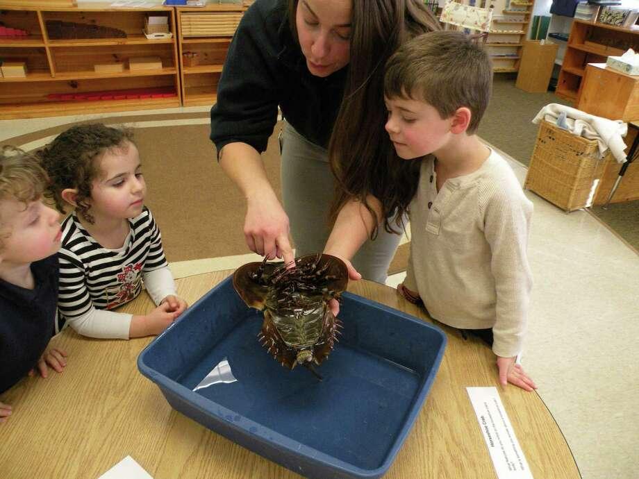 Ridgefield Montessori School turns 20 years old in August. Photo: Contributed Photos