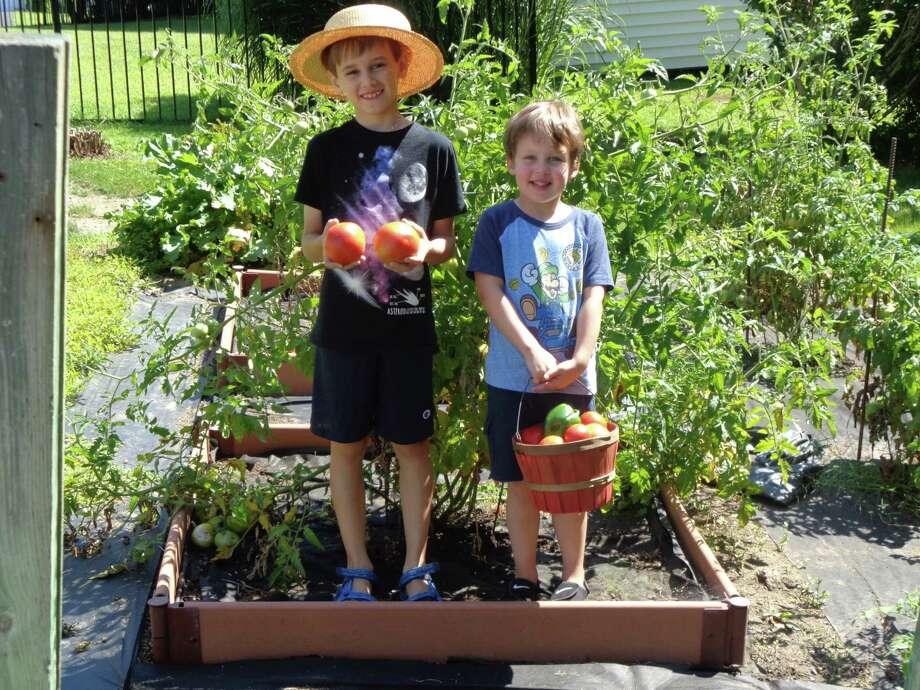 Alex, 9, and Kevin Kwaitkowski, 4, enjoy picking tomatoes and peppers from the vegetable garden of their grampy, Jim Magenis of Guilderland. The plants are so heavy that they have to be supported with rebar. They are the sons of Lori and Ed Kwiatkowski of Niskayuna. (Photo by Cyndi Magenis)
