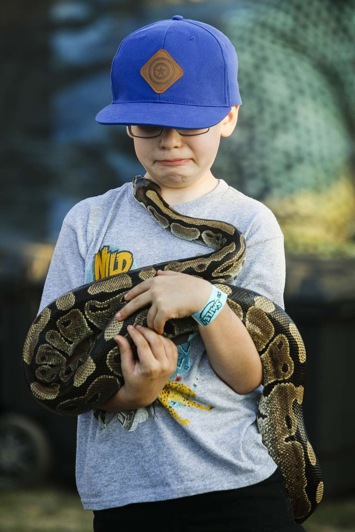 Alex Pelliccia of Midland, 8, holds a smaller python during Danny Conner's Reptile Adventures show on Tuesday, Aug. 13, 2019 at the Midland County Fair. (Katy Kildee/kkildee@mdn.net)