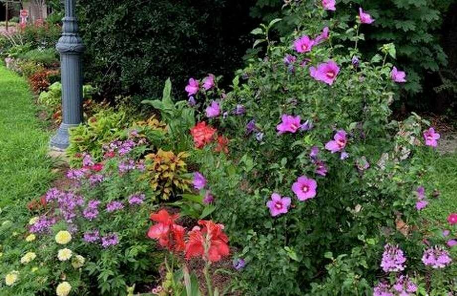 The Chess Park garden near the entrance to Schenck's Island is blooming. Photo: Suzanne Knutson / Wilton Garden Club / Wilton Bulletin Contributed