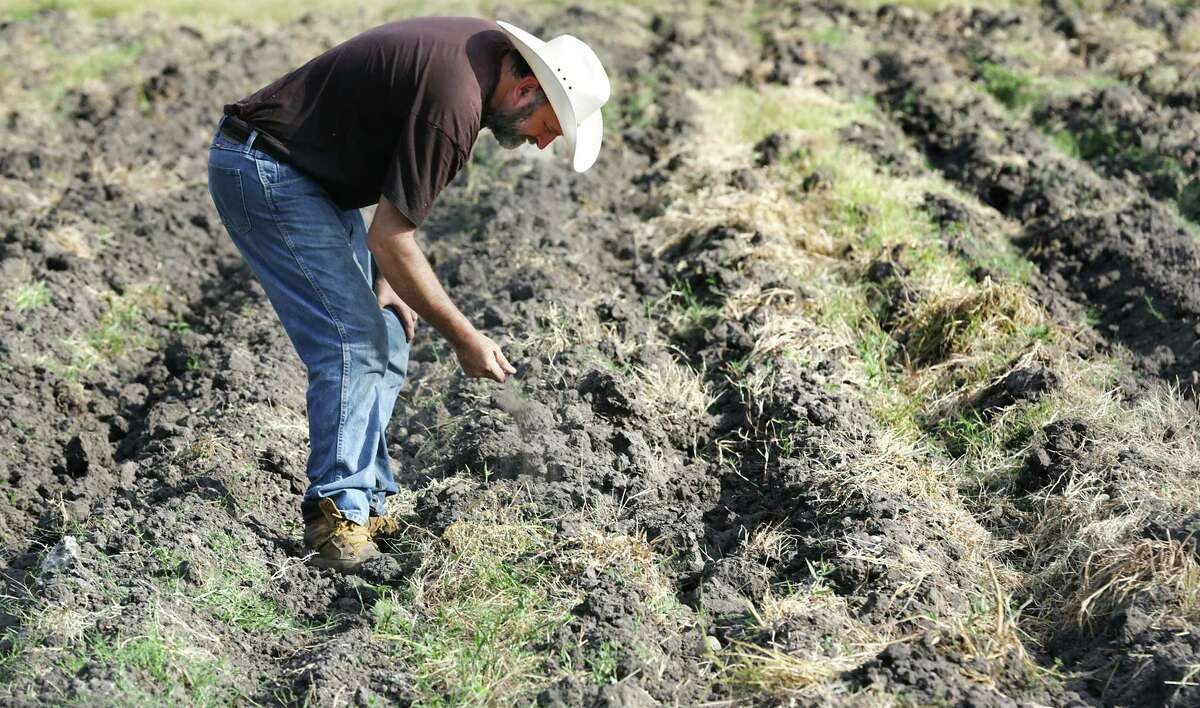 Pedro Schambon, owner and founder of My Father's Farm in Seguin, checks the moisture in a field where he plans to plant radishes. He grows 100% organic herbs and vegetables at his farm.