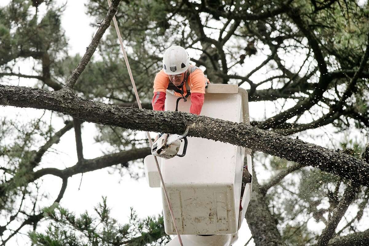 Jose Villeda with Mowbray's Tree Service, contracted by PG&E to handle vegetation management, cuts limbs from a tree that is being removed along Skyline Blvd. in Oakland, CA on June 26th, 2019.