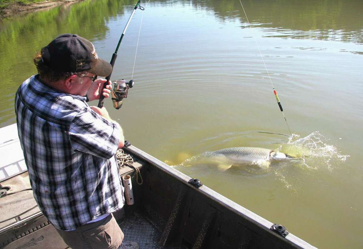 A package of changes in rules governing alligator gar fishing, including restrictions on taking alligator gar longer than 48-inches from the Trinity River, a ban on nighttime bowfishing for alligator gar on the Trinity and mandatory reporting of alligator gar harvest in almost all other Texas waters, takes effect Sept. 1