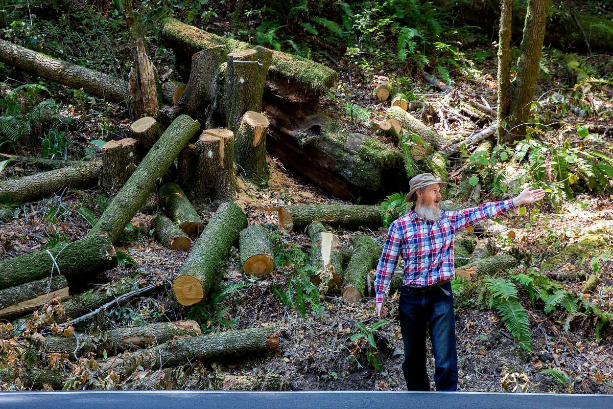 Richard Seamen along the Bohemian Highway with a cut down tree on Wednesday, Aug. 7, 2019, in Camp Meeker (Sonoma County), Calif. PG&E is cutting down trees near lines to reduce fire danger. Camp Meeker residents are upset that the crews are cutting down and limbing too many redwoods. Seaman said the tree was cut by crews and left there.