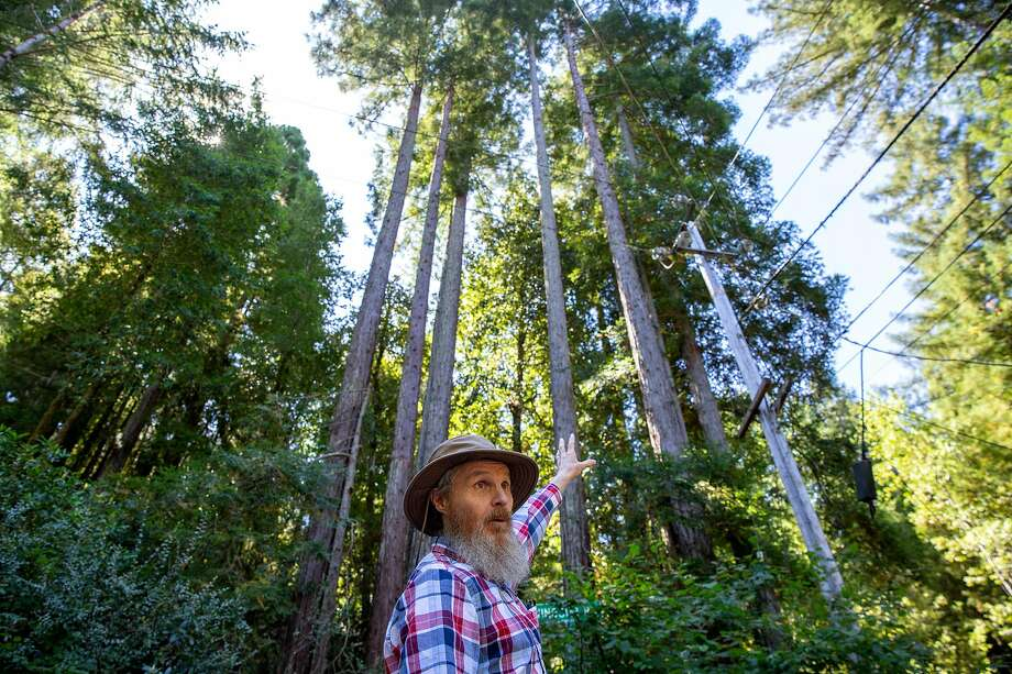 Richard Seamen shows where trees were cut down at Camp Meeker in Sonoma County. PG&E is cutting down trees near lines to reduce fire danger. Camp Meeker residents are upset that the crews are cutting down and limbing too many redwoods. Photo: Santiago Mejia / The Chronicle