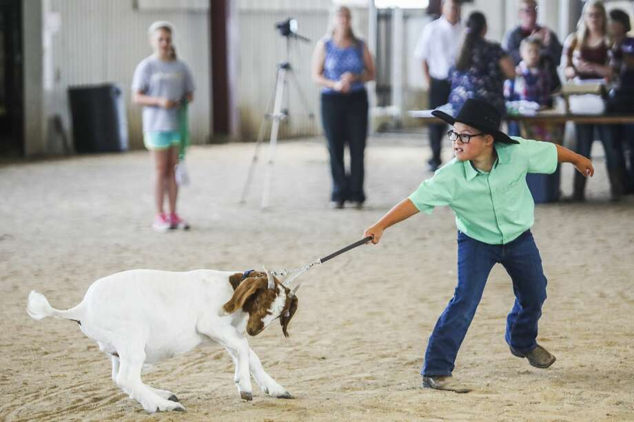 Jayson Brooks shows his goat during the small animal auction on Wednesday, Aug. 14, 2019 at the Midland County Fair. (Katy Kildee/kkildee@mdn.net) Photo: (Katy Kildee/kkildee@mdn.net)