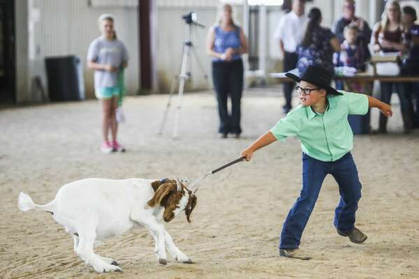 Jayson Brooks shows his goat during the small animal auction on Wednesday, Aug. 14, 2019 at the Midland County Fair. (Katy Kildee/kkildee@mdn.net)