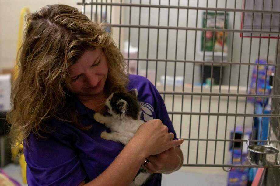 Volunteer coordinator Macheal Ita comforts a kitten Tuesday, June 18, 2019 at the Montgomery County Animal Shelter in Conroe. Photo: Cody Bahn, Houston Chronicle / Staff Photographer / © 2019 Houston Chronicle