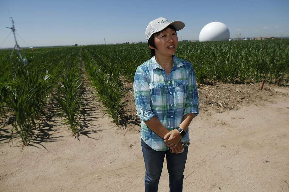Huihui Zhang of the United States Department of Afgriculture talks about efforts to use technology at a research farm northeast of Greeley, Colo. Photo: David Zalubowski / Associated Press