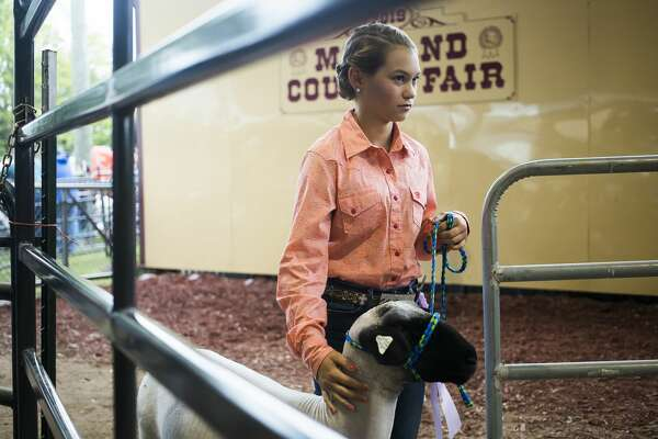 Children show animals during the large animal auction Thursday, Aug. 15, 2019 at the Midland County Fair. (Katy Kildee/kkildee@mdn.net)