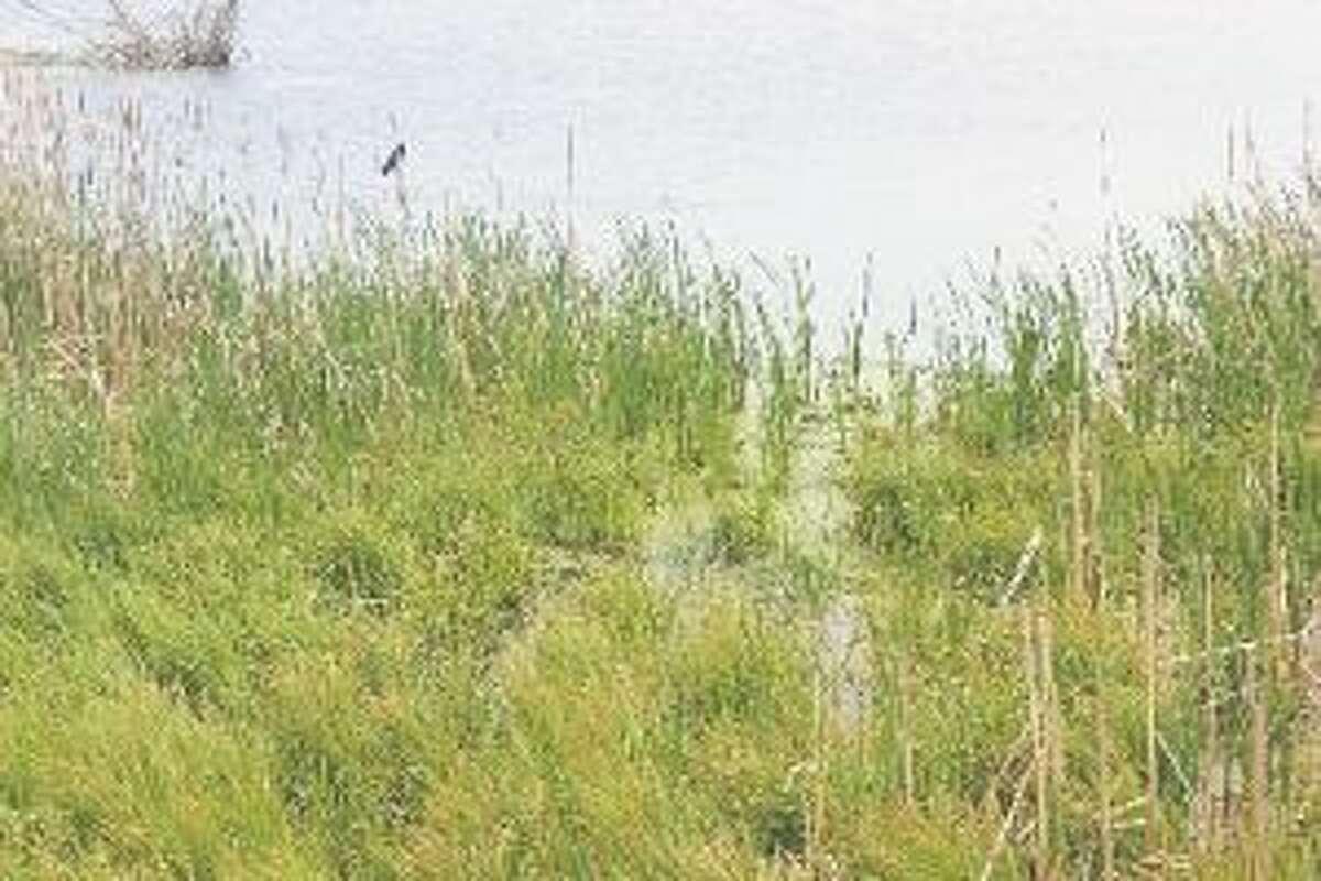 Arcadia Marsh is a great inland birding location. (File photo)