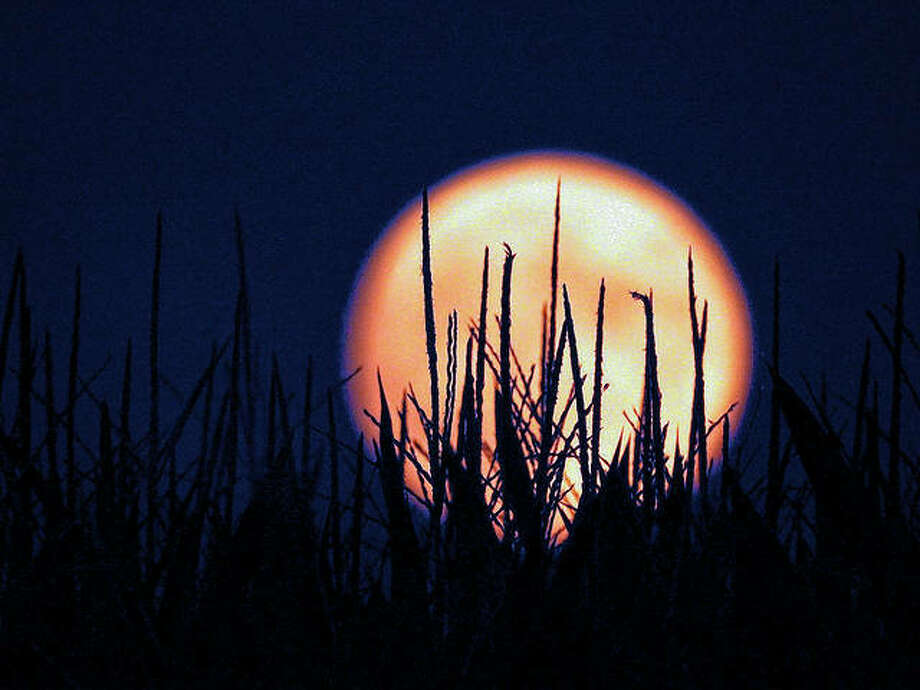 "An ""Aquarius moon"" shines through a field of corn. The moon is said to bring a heightened sense of the need for emotional freedom."