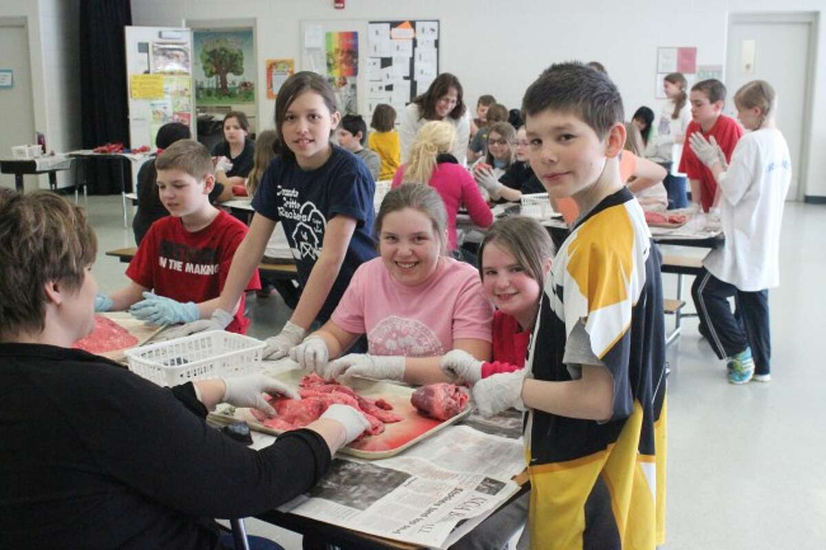 LEARNING AND HAVING FUN: The students at Lake Ann Elementary had fun while also learning about the different body systems by dissecting the organs of pigs.