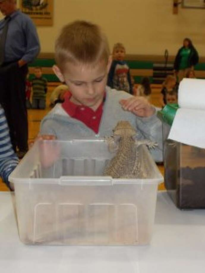 """BEING CAREFUL: Lake Ann student Adam Coyne decides whether to pet a bearded dragon lizard during the """"Animals from Around the World"""" assembly. (Courtesy photo)"""