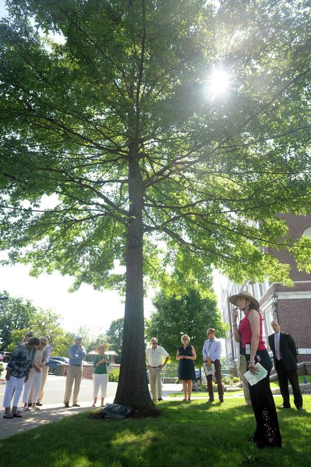 Cheryl Dunson, President of The Greenwich Tree Conservancy, leads a ceremony beneath the pin oak tree in front of Town Hall, in Greenwich, Conn. Aug. 15, 2019. A plaque was unveiled at the foot of the tree, which was planted in 2007 to replace a historic oak tree that had stood on the property for many years. That tree was destroyed by an ice storm in 2006. Photo: Ned Gerard / Hearst Connecticut Media / Connecticut Post