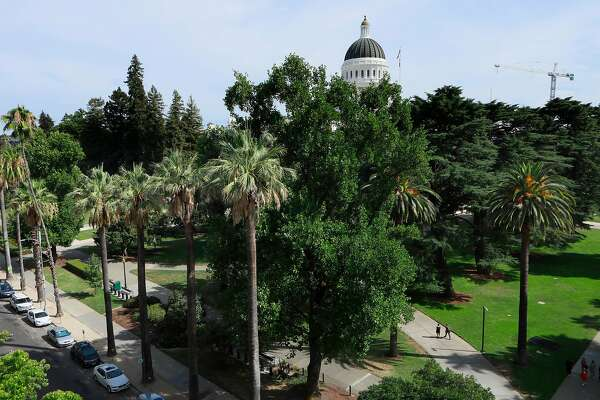 Trees blanket the grounds of State Capitol Park in Sacramento, Ca., on Mon. August 5, 2019.