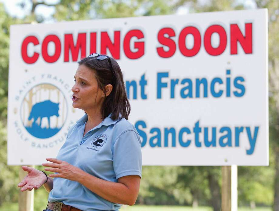 Nicole Rogers, executive director of the Saint Francis Wolf Sanctuary, talks about the non-profit's new, 15-acre home, Friday, Aug. 16, 2019, in Navasota. The orgnization, which provides permanent homes for non-releasable wolves and wolfdogs, will move in July 2020 to the new site in Grimes County, which is five times larger than its current boundaries, after 16 years in Montgomery County, Photo: Jason Fochtman, Houston Chronicle / Staff Photographer / Houston Chronicle