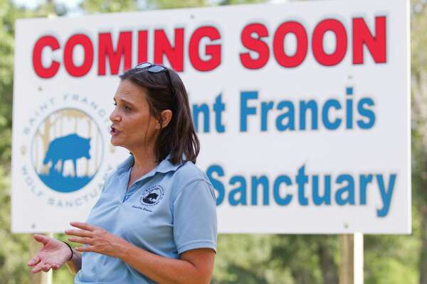 Nicole Rogers, executive director of the Saint Francis Wolf Sanctuary, talks about the non-profit's new, 15-acre home, Friday, Aug. 16, 2019, in Navasota. The orgnization, which provides permanent homes for non-releasable wolves and wolfdogs, will move in July 2020 to the new site in Grimes County, which is five times larger than its current boundaries, after 16 years in Montgomery County,
