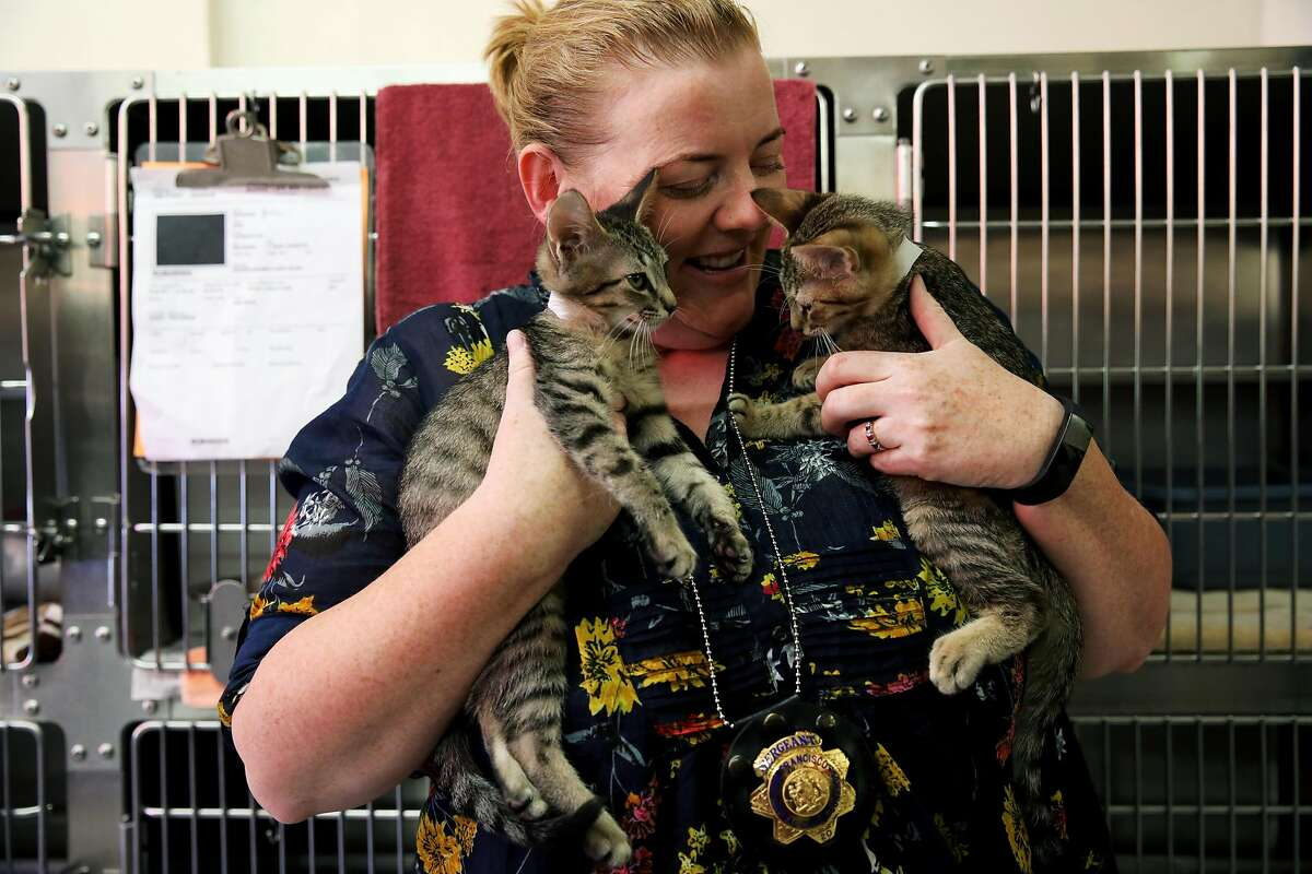 Eleanor Sadler, a sergeant with the San Francisco Animal Care and Control, holds kittens in San Francisco, Calif., on Thursday, August 15, 2019.