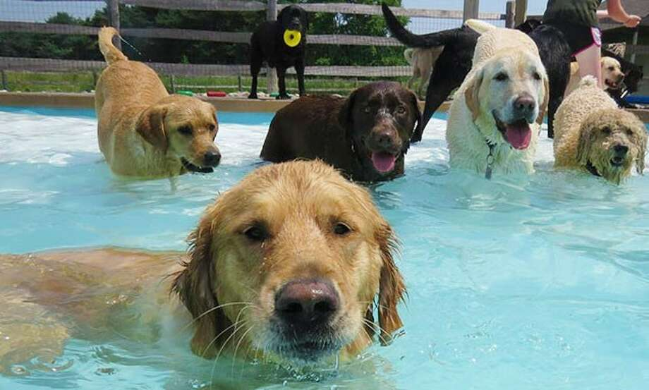 Veterans Park Pool in Amsterdam will be the scene of the MCSPCA Pooch Plunge, sponsored by Beckmann Converting on Saturday, Aug. 24. (Photo provided)
