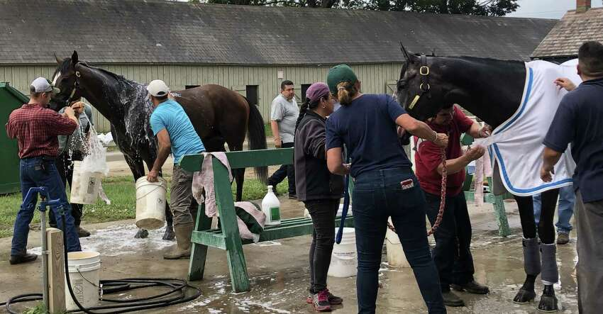 If you are into star horses, take a look at this. Standing side by side outside trainer Bill Mott's barn on Saturday morning were Yoshida, left, and Tacitus. Yoshida just ran second in the Whitney Stakes two weeks ago and will likely be back to defend his title in the Woodward here on closing weekend. Tacitus, the winner of the Wood Memorial, was second in the Belmont and Jim Dandy and is running in the Travers on Saturday. Not sure what the two were talking about, if anything, as they got cleaned up. (Tim Wilkin / Times Union)