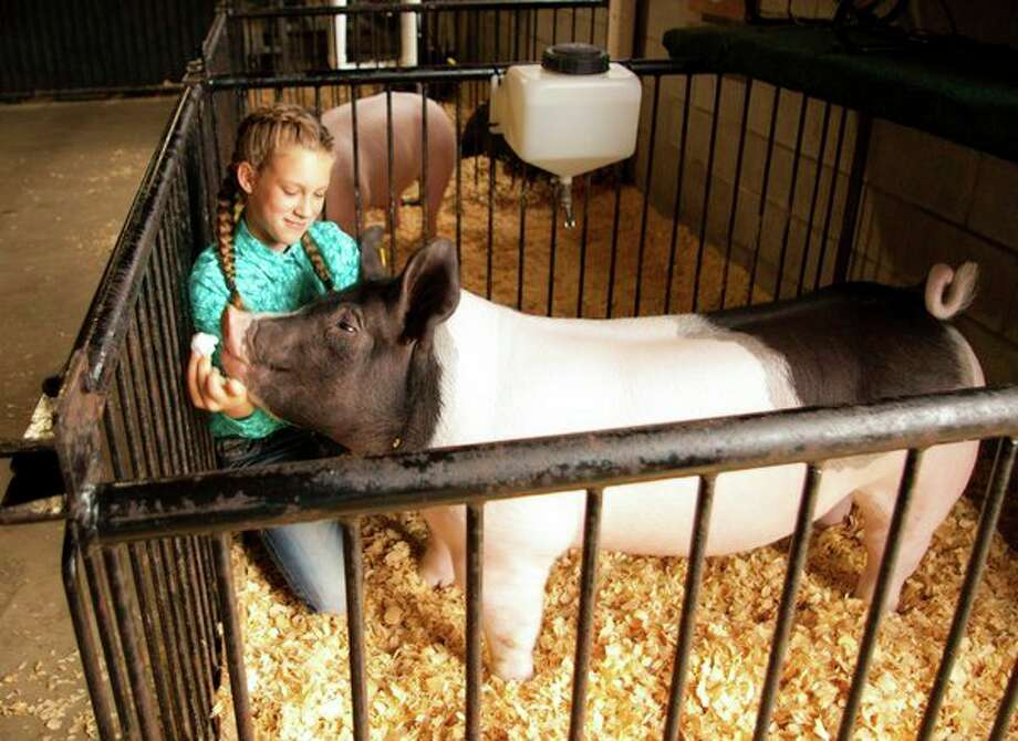 Victoria Kennedy, representing Geneva Livestock, feeds her pig, G.O.A.T., a marshmallow before the 4-H Large Animal Auction on Thursday at the Midland County Fair. G.O.A.T. was named Grand Champion in the swine category. (Niky House/for the Daily News)