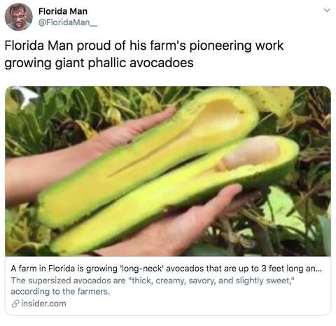 These giant avocados grown in Florida cost up to $15 each