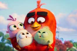 Still from 'Angry Birds 2.' (Sony/TNS)