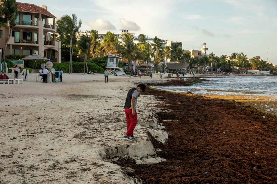 A child covers his nose because of the rotten-egg odor of the seaweed along the shore in Playa del Carmen, Mexico. Photo: Photo By Alejandro Cegarra For The Washington Post / For The Washington Post