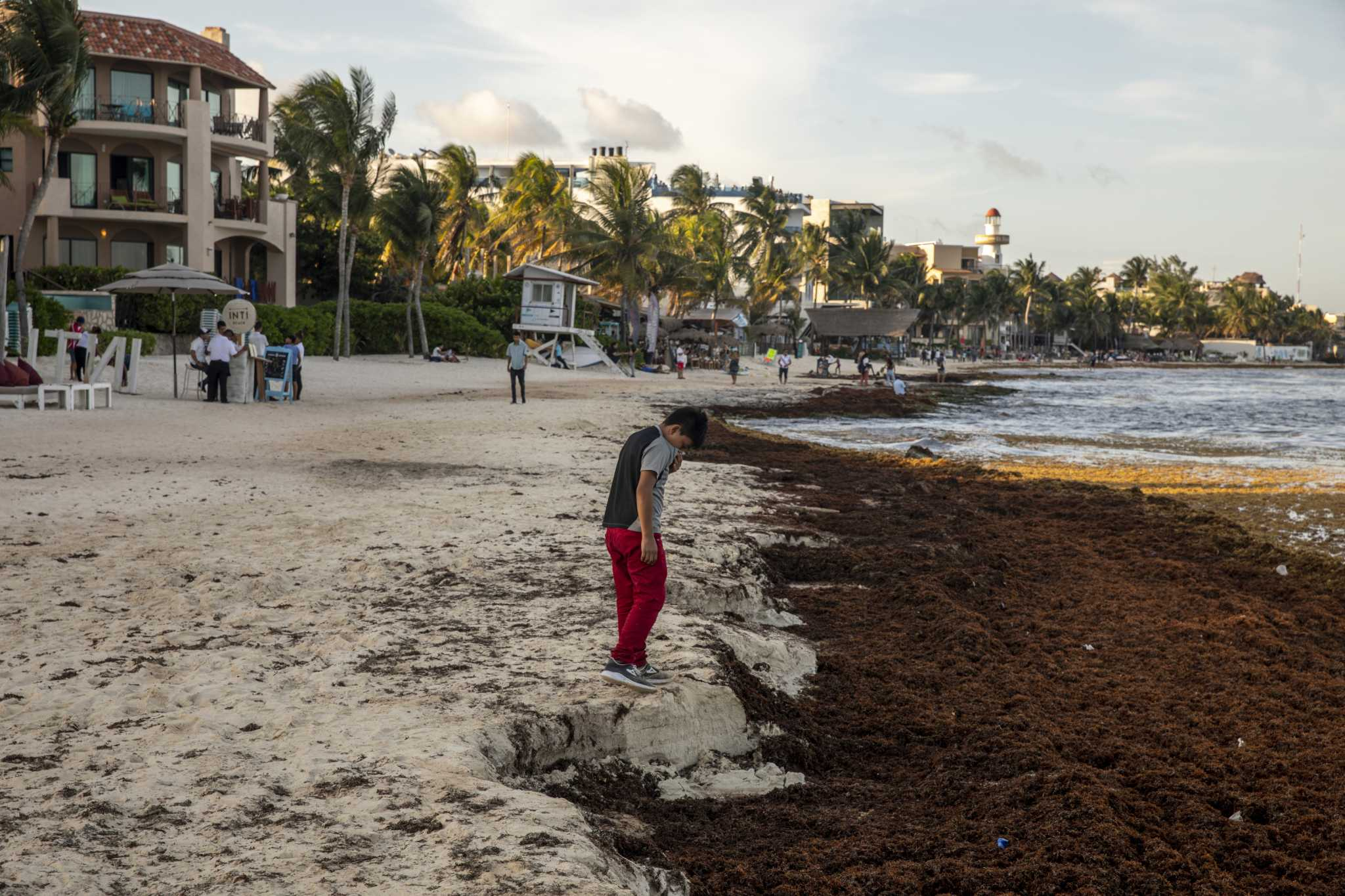 Summer seaweed invasion taking a toll on Mexico